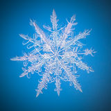 A real snowflake macro lies on a blue background. As if flying in sky Royalty Free Stock Images