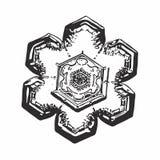 Real snowflake on white background Stock Photos