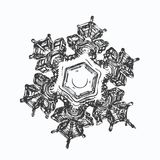 Real snowflake on white background Stock Images