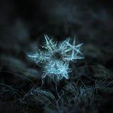 Real snowflakes glowing on dark textured background. Three snowflakes glowing on dark textured background. Macro photo of real snow crystals: large stellar Royalty Free Stock Photos