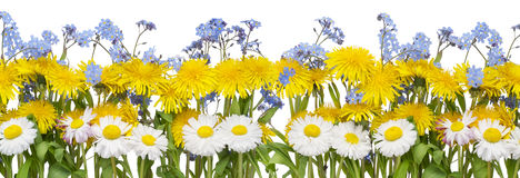 Real spring flowers border Stock Images