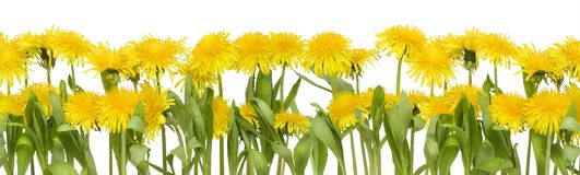 Real spring flowers border Royalty Free Stock Photos