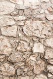 Real stone wall texture background. Pattern color of modern style design decorative uneven, real stone wall surface with cement stock image