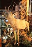 Real stuffed deer Stock Images