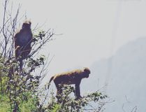 Monkey. A real super heros stock photos