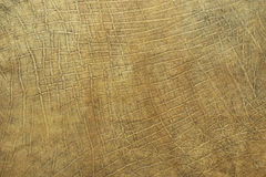 Real texture of african elephant leather. Natural pattern for your design royalty free stock image