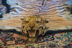 Real tiger carpet in the palace stock photography