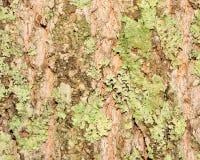 Real Tree Bark Royalty Free Stock Photos