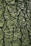 Real tree bark texture. Large area of a real tree bark texture Stock Photo