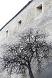 Real tree with wall background Royalty Free Stock Image