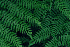 Real tropical leaves background, jungle foliage. Vintage Royalty Free Stock Photo
