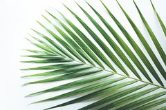 Real tropical leaves backgrounds on white.Botanical nature concept. S.flat lay design Stock Image