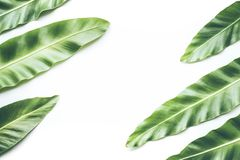 Real tropical leaves backgrounds on white.Botanical nature concept. S.flat lay design Royalty Free Stock Images