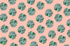 Real tropical monstera leaves pattern design on pastel color. Background.Nature and holiday summer concepts.Floral elements stock photography