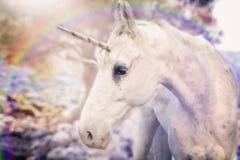 Real unicorn white horned. Horse stock photo