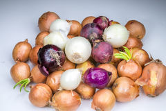 Real white red and gold onions Stock Images