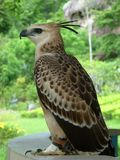Free rough beautiful wild bird royalty free stock photos