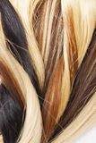 Real woman hair texture. Human hair weft, Dry hair with silky volumes. Real european human hair wallpaper texture. Brown blond dar Royalty Free Stock Photography