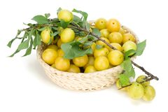 Real yellow plums in basket Stock Images