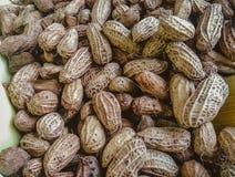Reala Gotowany arachid 001 Obraz Stock