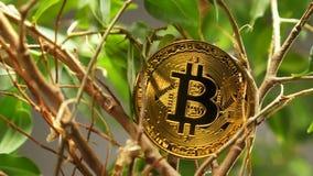 Reala model na krzakach Robić Jako Wirtualna waluta Bitcoin zbiory