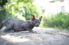 Reala przybłąkany kot Zdjęcie Stock