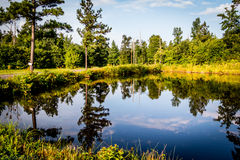 Reale, stagno dell'Arkansas fotografia stock libera da diritti
