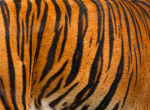 Realer Tiger-Pelz-Beschaffenheits-gestreiftes Muster-Hintergrund Lizenzfreie Stockfotografie