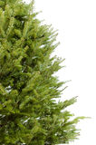 Realer Weihnachtsbaum Lizenzfreie Stockfotografie