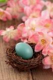 Reales Rotkehlchen-Ei mit rosafarbenen Frühlings-Blumen Stockfoto