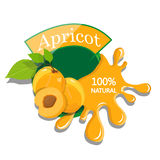 Realistic apricot. Royalty Free Stock Photo