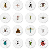 Realistic Arachnid, Poisonous, Damselfly And Other Vector Elements. Set Of Insect Realistic Symbols Also Includes Gnat Stock Photos