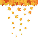 Realistic Autumn Leafs Stock Photography