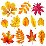 Realistic autumn leaves. Fall orange wood foliage of chestnut and maple. Oak and ash, linden and birch leaf isolated