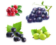 Realistic Berries Set Royalty Free Stock Photo