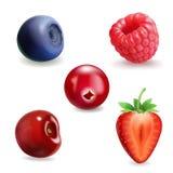 Realistic berry set. Strawberry, raspberry, blueberries, cherry black currant illustration. Realistic berry set. Strawberry, raspberry, blueberries and cherry vector illustration