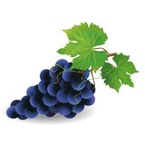 Realistic black grape  Royalty Free Stock Photo