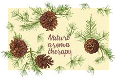Realistic Botanical ink sketch of colorful fir tree branches with pine cone isolated on white background. Good idea for vector illustration