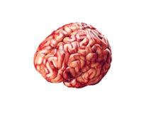 Realistic brain illustration Royalty Free Stock Photos