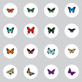 Realistic Checkerspot, Danaus Plexippus, Morpho Hecuba And Other Vector Elements. Set Of Moth Realistic Symbols Also royalty free illustration