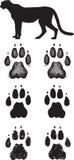 Realistic cheetah tracks or footprints. A pair of realistic cheetah tracks done in 3 illustration styles Royalty Free Stock Image