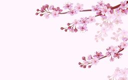 Free Realistic Chinese Pink Sakura Background On Soft Rose Background. Oriental Pattern Flower Blossom Spring Background. 3D Royalty Free Stock Photography - 144464997
