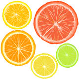 Realistic citrics, set of fruit slices Stock Photography