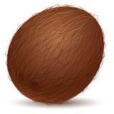 Realistic coconut Stock Image