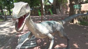 Realistic coelophysis dinosaur in dino park Head and body. This is footage of Realistic coelophysis dinosaur in dino park Head and body stock footage