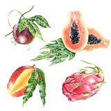Realistic collection of botanical tropical fruits Stock Image