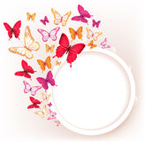 Realistic Colorful Butterflies  for Spring Stock Photography