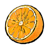 Realistic colorful hand drawn half of juicy orange, vector illustration Stock Photo