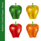 Realistic colorful pepper Royalty Free Stock Images
