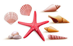 Realistic Colorful Starfish Set in White Background Stock Photography